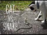 Бой века: Кот против Змеи в Тайланде!