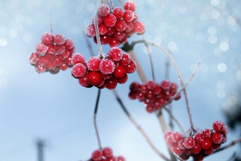 Ноябрь - что можно сделать в саду и огороде