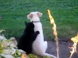 Кот и пёс как Инь и Ян