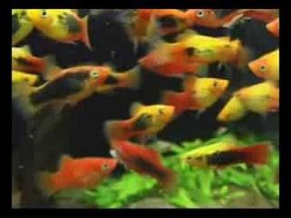 Кондиционеры и препараты для аквариума.