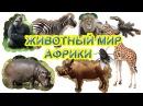 Животный мир Африки. Как говорят животные Слушаем звуки. Развивающие мультики.