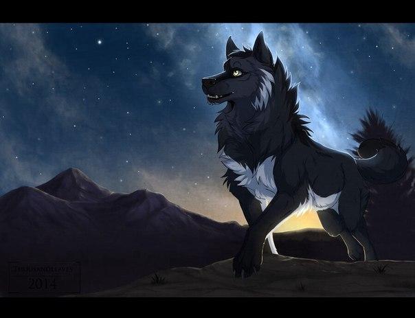 волки аниме фото