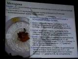 Аналоги феромонов медоносной пчелы в шмелеводстве (Hymenoptera, Apoidea).