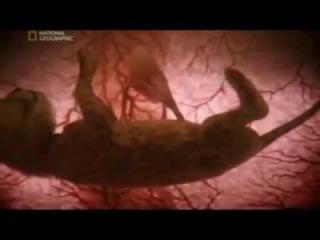Кошки  Жизнь до рождения  In The Womb  Cats  полная версия