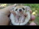 Милые детёныши животных