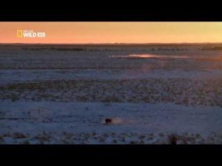 National Geographic. Дикая Канада 3 серия 2014 года HDTVRip