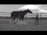 История одной лошадки 2015. Смотреть онлайн в HD качестве прямо сейчас: http://getstarg.ru/kino/201510/28187.html