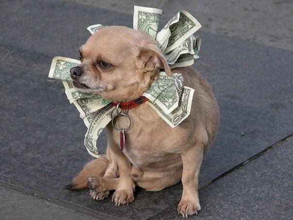 взять займ без банка