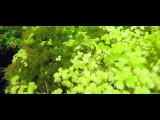 Beautiful Aquascape (The Art of the Planted Aquarium) eNCREST 90sec