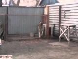 Злой пёс танцует под песню группы модерн токинг.