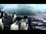 DJ Nil &amp X-Mode - В Мире Животных  Animal Kingdom