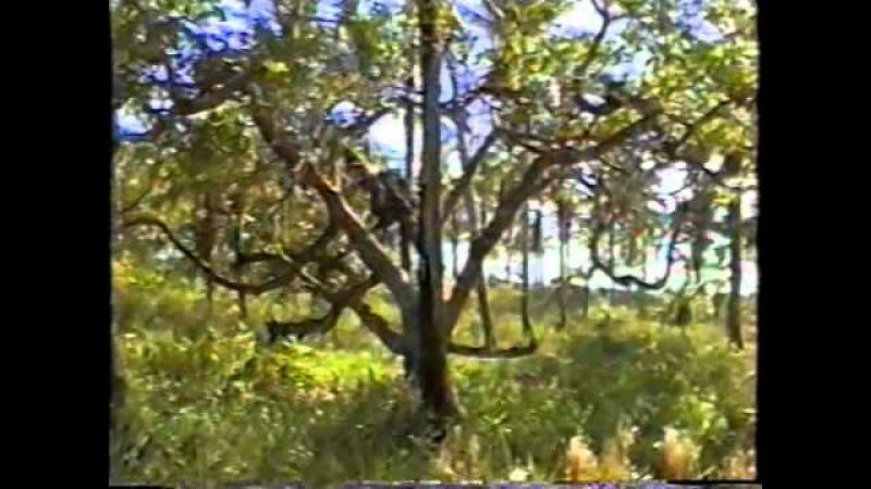 Canavieiras BA Dom Ivan Hotel Ilha Atalaia Meia Lua Mestres Federa Barriga Dez00 01