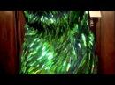 SHERRI HILL 2884 BLACK/GREEN