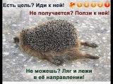 Жизнь очень коротка... Я буду действовать !!!