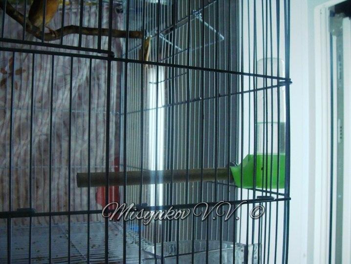 Жердочки у моих птиц  4O75GjmBvZA