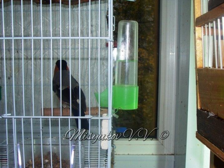 Жердочки у моих птиц  7e3nvv5U9jM