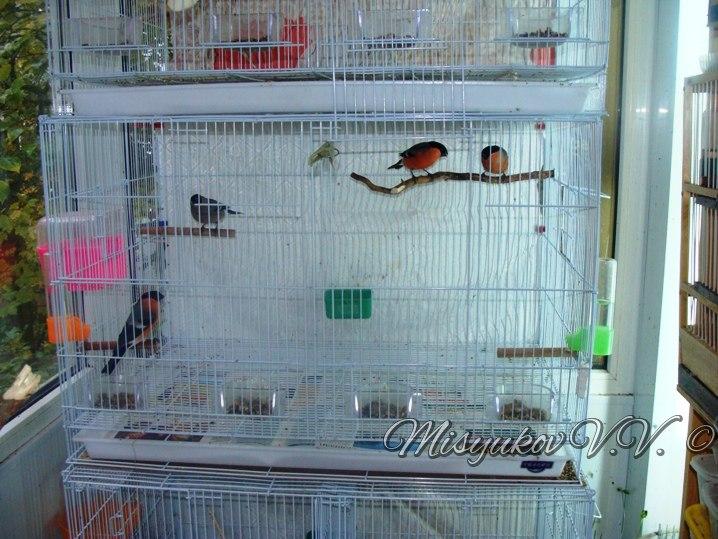 Жердочки у моих птиц  D8iFg-xw91w