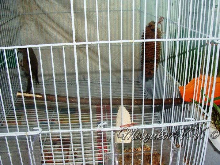 Жердочки у моих птиц  QPNNMNnPyVU