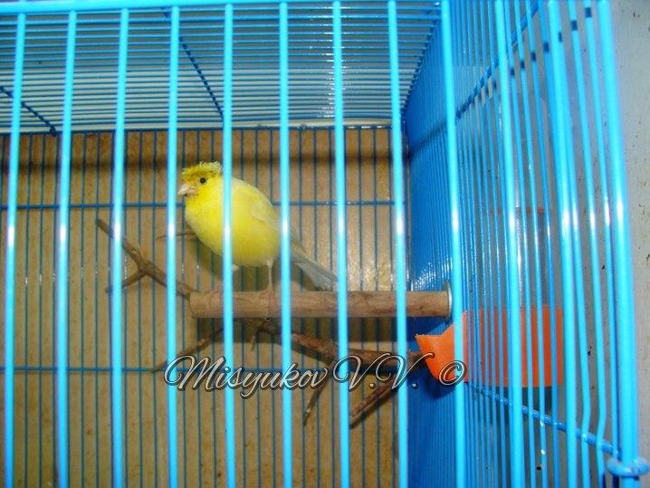 Жердочки у моих птиц  Rou5rNmd5Tk