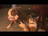 Эпическая битва кота с собакой в замедленной съемке