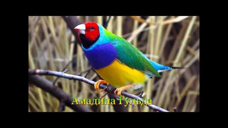 Самые красивые птицы планеты Земля