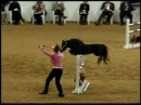 2009 American Miniature Horse Champ Youth Jumper - 2