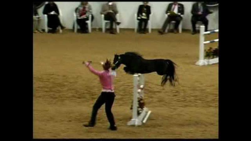 2009 American Miniature Horse Champ Youth Jumper - 2