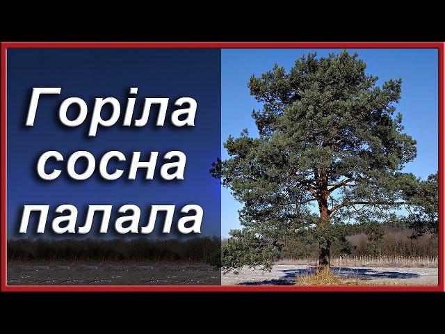 Українські народні пісні Горіла сосна палала