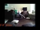 ЗОО порно собака цп порно 12 лет псу