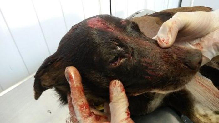 В Ростовской области задержали мужчину, убившего домашнюю собаку ломом по голове