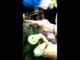 Змеи для Шивы!!!)))