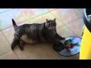 Котик оооочень голоден