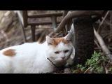 タイヤとシロ Tire and cats