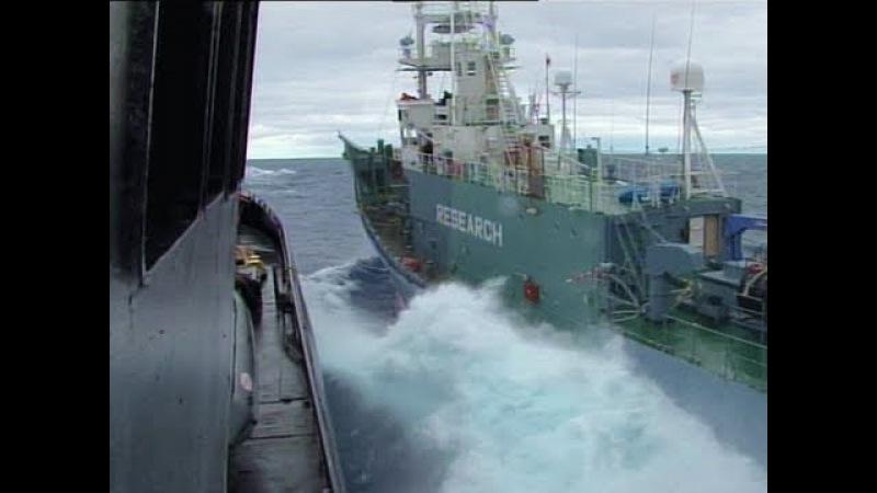 Whale Wars - Sea Sepherds gerammt!