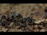 Microcosmos- Le peuple de l'herbe HD