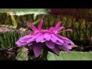 Дикая природа Амазонки. Колыбель жизни