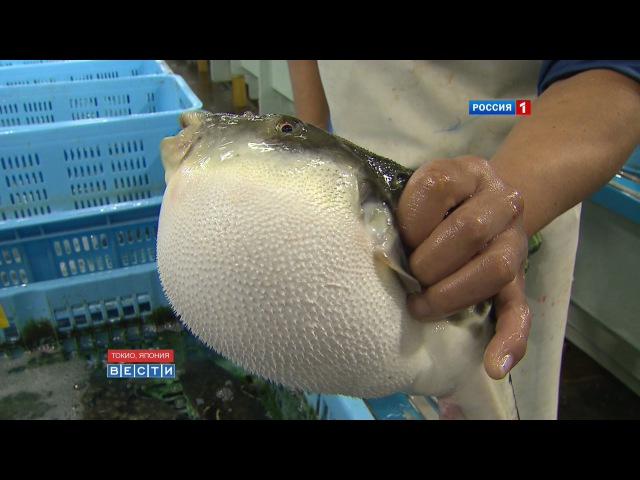 Рыба фугу рискованный деликатес Fugu-fish risky Japanese delicacy フグ