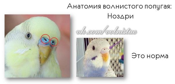 Список имен для попугаев