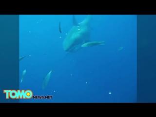 Новый мегалодон Опубликовано видео самой большой в мире акулы (1)