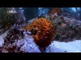 Самые Странные в Мире Животные   Чудаки в Океане