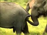 животный мир спаривание не по детски 18+