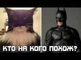 Кто на кого похож? Коты которые похожи на известных людей и персонажей
