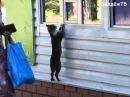Коты попрошайки