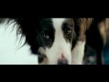 В. Гафт - От чего так предан пес... (стихотворение из к/ф