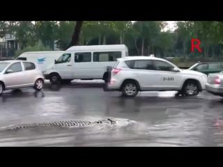 Крокодил на улице в Тбилиси после наводнения!