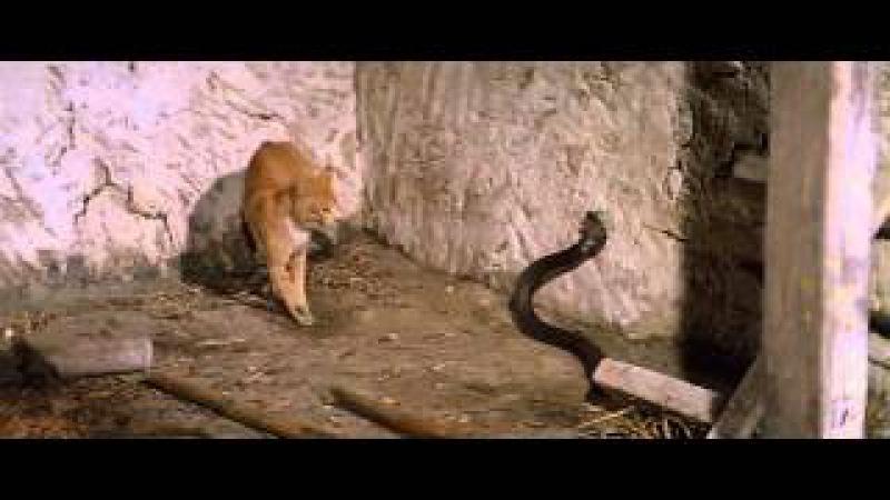 Cat Fight With Cobra (catfight)