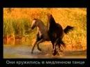 Красивая музыка о нежности и любви Арабатский конь mp4
