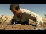 Как выбраться из зыбучих песков