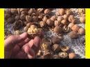 Как расколоть ведро орехов за 2 минуты