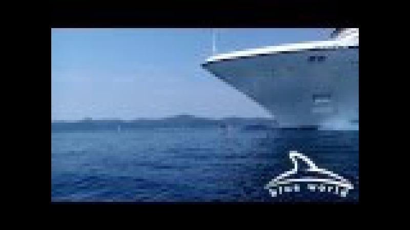 Bottlenose dolphins bowride 244 m long cruise ship